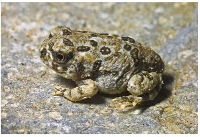 karen toad climate change Document4