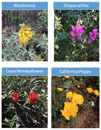 four native plants Screen Shot 2017-04-02 at 2.26.10 PM