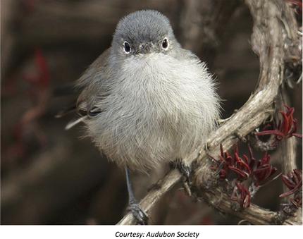 new ccg audubon 2
