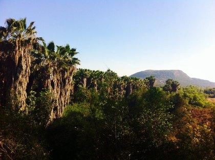 palm tree stand lake calavera 2