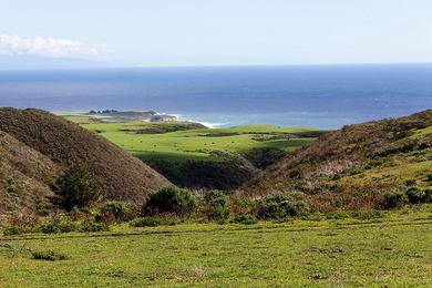 Coast_Dairies_near_Santa_Cruz