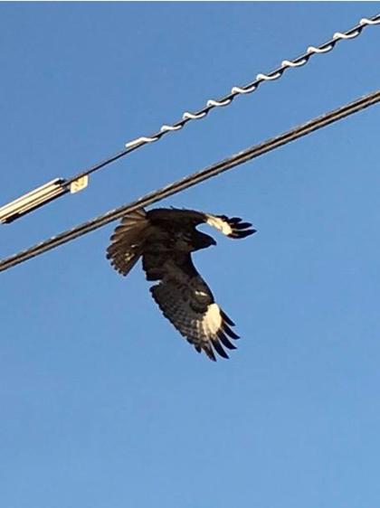 Jim Werth golden eagle